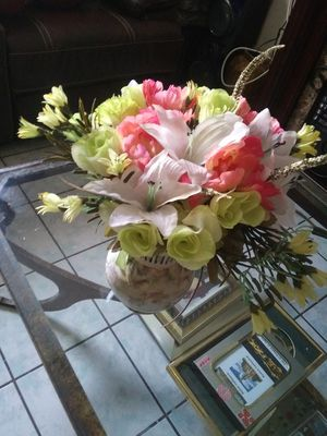 Plants for Sale in Gulfport, FL