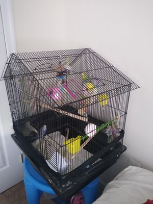 Large bird cage with 3 birds healthy for Sale in Burtonsville, MD