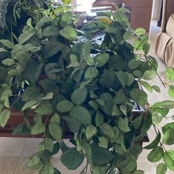 2 FAKE plants With Vase for Sale in Fort Lauderdale,  FL