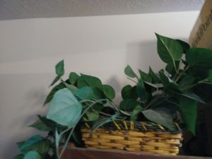 2 fake decorative plants in brand new condition for Sale in Strongsville, OH