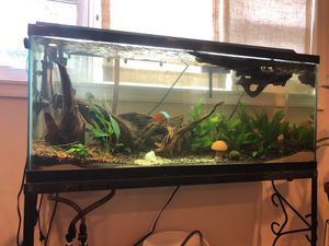 55 gallon fish tank aquarium with driftwood, growing media, fully planted, filters, heaters etc. for Sale in Falls Church, VA