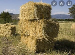 Hay Straw for Sale in Portland, OR