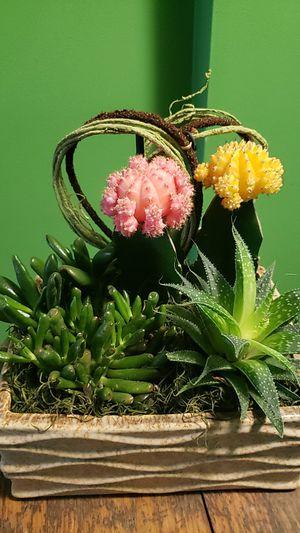 Succulent arrangement for Sale in Clinton, MD