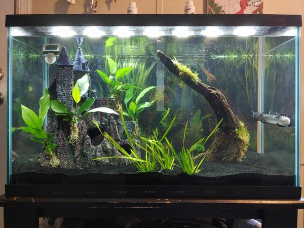 30 gallon tall fish tank with stand