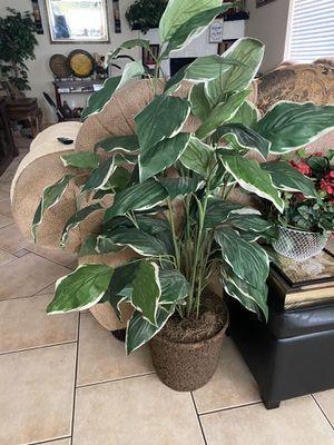 Plant for Sale in Avondale, AZ