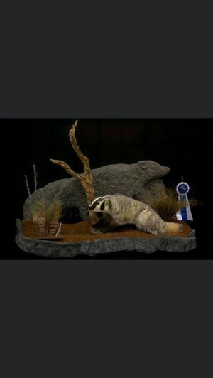 Taxidermy Mount Badger for Sale in Payson, AZ