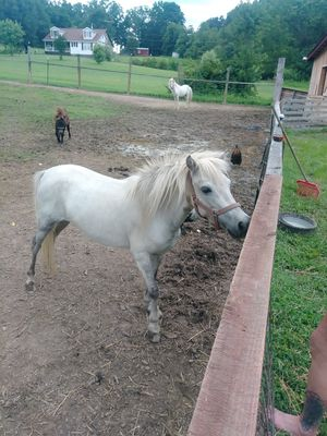 Registered Appaloosa Mare for Sale in Luray, VA