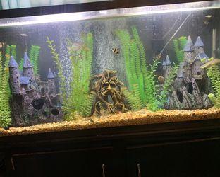 Fish Tank for Sale in Winton,  CA