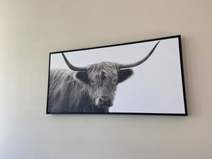 Bull photo for Sale in Chicago, IL