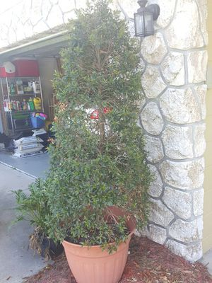 5 ft Topiary Tree great condition for Sale in Winter Park, FL