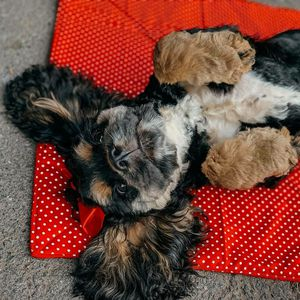 Home made puppy potty pads for Sale in Delta, CO
