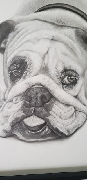 Custom Pet Portrait Drawing for Sale in Pensacola, FL