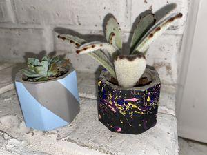 Succulent Pot Plants for Sale in Grapevine, TX