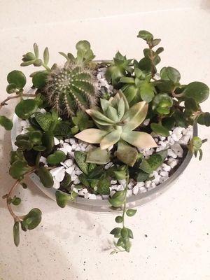 succulent arrangement dish for Sale in Douglasville, GA