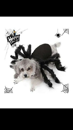Halloween spider costume for dog or cat for Sale in Long Beach, CA