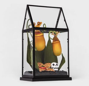 Hyde & Eek Yellow Creepy Face Halloween Faux Plants Terrarium Succulent Target for Sale in Los Angeles, CA