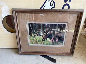 Moose picture for Sale in Denver, CO