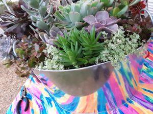 "13"" pots with succulent plants $22 each for Sale in La Mirada, CA"