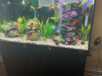 60 Gallon Fish Tank With Stand for Sale in New York,  NY