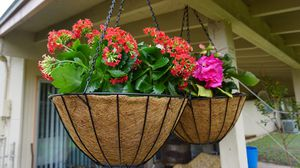 Vigoro Black Growers Hanging Basket Planter with Chain Flower Plant Pot Home of for Sale in San Antonio, TX