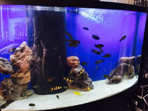 Oceanic 100g tall saltwater/ freshwater aquarium for Sale in San Diego, CA