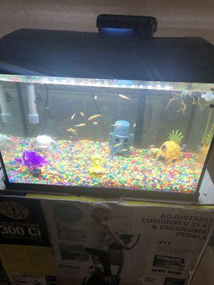 20 Gallon Fish tank w / Decorations for Sale in Punta Gorda, FL
