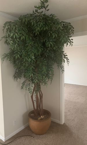 Plant for sale fake for Sale in Macomb, MI