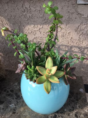 Succulent plant arrangement for Sale in Rancho Cucamonga, CA