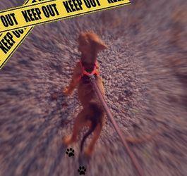 Fila Brazilian Mastiff Mix for Sale in Miami,  FL