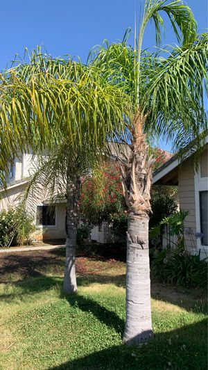FREE !!! FREE !!!! BIG PALMS GRATIS !!!! for Sale in Moreno Valley, CA