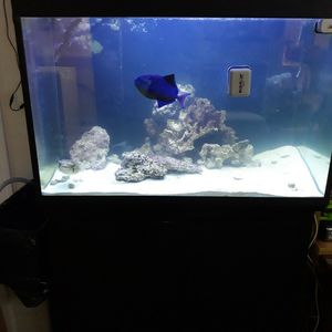 Fish tank Axesorios With Fish for Sale in Irving, TX