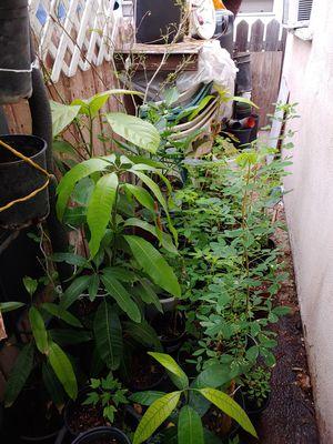 Tengo estas plantas diferentes precios for Sale in Los Angeles, CA