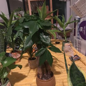 Plants for Sale in Brooklyn, NY