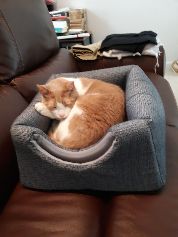 Cat Bed / Cozy House