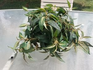 Fake plant for Sale in Glendale, AZ