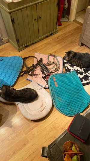 Used full size horse saddle pads & bridles for sale for Sale in Havre de Grace, MD