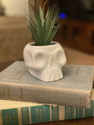 Halloween Skull with Succulent (Large) - Hyde & EEK! Boutique™ for Sale in Desert Hot Springs, CA