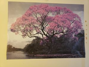 Large Nature Poster for Sale in Adelphi, MD