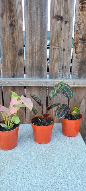 House plants for Sale in City of Industry, CA