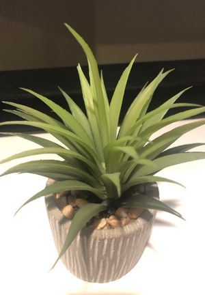 Small succulent for Sale in Boston, MA