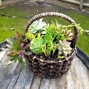Basket Of Succulents for Sale in Gilroy, CA