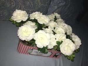 Decor for wedding, baptism, party Ect for Sale in Venus, TX