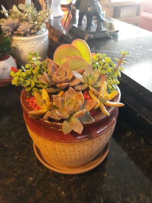 Nice terracotta pot with live succulent Arrangement and Red Rock accent for Sale in Chandler, AZ