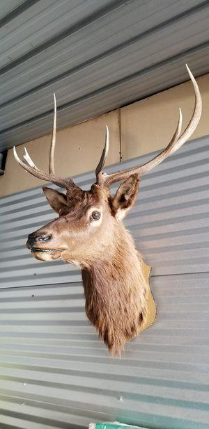 6 point elk head taxidermy. for Sale in Phoenix, AZ
