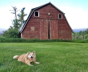 Barn wood for sale for Sale in Akeley, MN