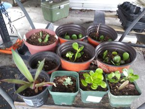 Assorted Plant's $5.00 for Sale in Polk City, FL