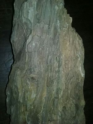 Awesome fossils,,,, 2 big logs of petrified wood on sale right now take 40% off ,each rock weighs about 200lbs. Call (REMOVED) for Sale in Abilene, TX