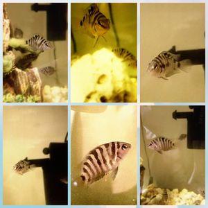 Fish tank supplies aquarium decorations for Sale in El Cajon, CA