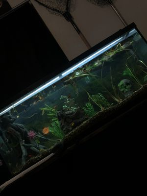 55 Gallon Fish Tank! for Sale in Henderson, CO