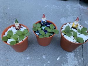 Kalanchoe plant $5 each for Sale in Orlando, FL